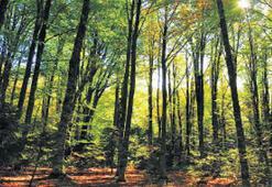 Kazdağları'nda doğa her mevsim güzel