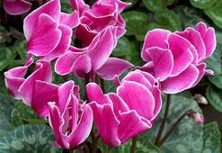 Sonbaharda yetiştirebilecek bitki türleri