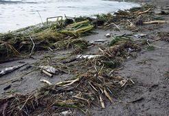 Finikede ölü balıklar sahile vurdu