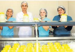 Karaburun'da peynir hamlesi