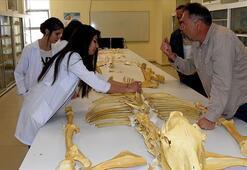 Kırşehirde bulunan milyon yıllık fosiller dünya literatürüne kazandırılacak