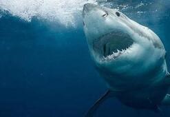 Her yerde aranıyordu Köpek balığının karnını açınca...