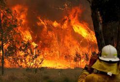 Orman yangınları ölüm saçtı
