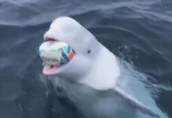 Denizciler, beyaz balinayla rugby oynadı