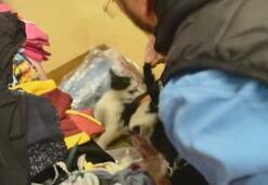 Giyim mağazasında kedi yakalama seferberliği