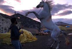 Hayatını atına borçlu Evde ameliyat gününü beklerken...