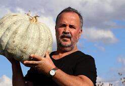 Edirne'nin Karaağaç kabağı için festival düzenlenecek