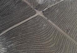 Guinness yetkilisinden en çok ağaç dikme rekoruna onay