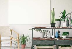 Çalışma alanlarında bitki yetiştirmek için 5 neden
