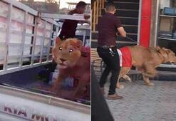 Polisin köpek getirdiğini duyan bir protestocu...