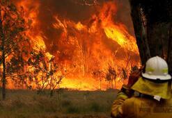 16 yaşındaki genç orman yangını çıkarmakla suçlanıyor