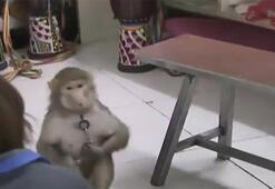 Çinde maymun, bakıcısının telefonundan sipariş verdi