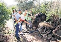 Kuyuya düşen yaban domuzu kurtarıldı