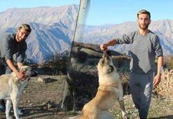 Ayının saldırısından köpekleri kurtardı Onlar için keçi kesti