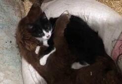 Minnoş ile Bobi'nin dostluğu