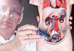 Üroloji nedir, neye bakar Üroloji (bevliye) bölümü doktoru (ürolog) hangi hastalıklara bakıyor