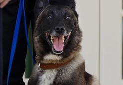 Trumptan Bağdadi operasyonunda görevli köpeğe plaket ve madalya