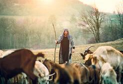 Akademik çoban