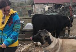 Doğum gününde hayvan barınağı ziyareti