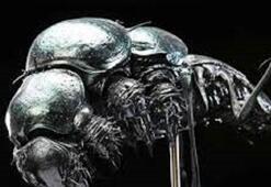 ABDli profesör Marsta böcek buldu İlk uzaylı ırk keşfedildi...