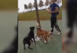 Maltepedeki pitbull vahşetinde 3 gözaltı