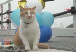 Maskot kedi için doğum günü partisi