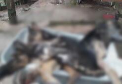 Bartında 6 köpek ölü bulundu