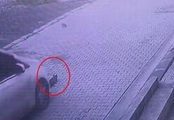Vicdansız sürücü yavru kediyi ezip kaçtı