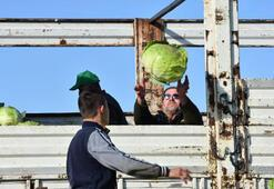 Lahana fiyatı üreticiden tüketiciye gidene kadar 4 kat artıyor