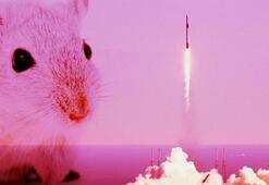 Uzaya gönderilen süper farelerden haber var