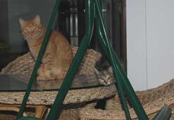 Sokak kedisi adeta terör estiriyor