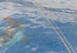 Antalyada görülen ay balığı şaşırttı