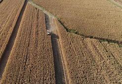 Topraksız çiftçiye Hazine arazisi desteği