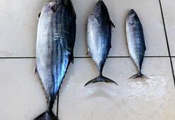 Çanakkalede balıkçı esnafından tombik uyarısı