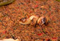 Kilis Tava nasıl yapılır Kolay Kilis Tava tarifi ve malzemeleri