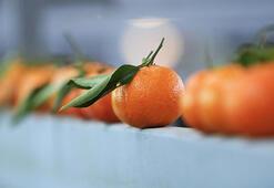 Rusyaya en çok mandarin ihraç edildi