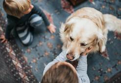 Köpek beslenen evde büyümek şizofreniyi engelliyor