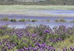 Son dakika | Yeni Dipsiz Göl olma tehlikesi yaşayan İris Gölü için flaş karar