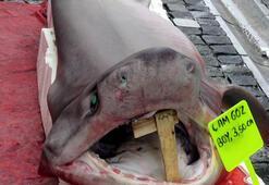 120 kilo 3 metre boyu var Marmara Denizinde köpek balığı yakalandı