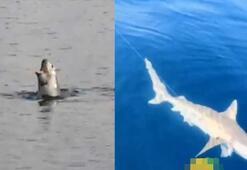 Akdeniz Körfezinde köpek balığı ve fok heyecanı