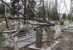 Mezarlıkta gören şaştı kaldı