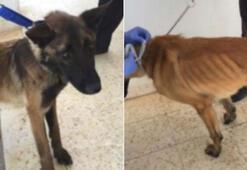 ABD, Mısır ve Ürdüne bomba arama köpeği göndermeme kararı aldı