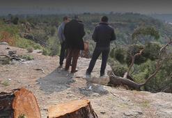 Ağaç kıyımı yaptığı iddia edilen Mehmet Şenol tutuklandı