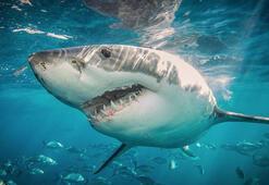 Köpek balığının midesinden insan kolu çıktı