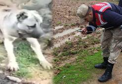 Hatayda bir köpeğin zehirlendiği iddiasına inceleme