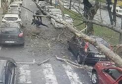 Şişlide ağaç yoldaki insanların üstüne böyle devrildi