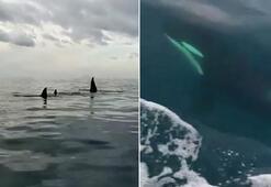 Akdenizde şoke eden görüntü Katil balinalar...