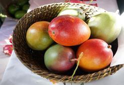 Mangoya talep artıyor