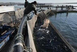 Balıkçılık yeni kanunla ivme kazanacak