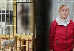 Beslediği kedi asılarak öldürülen Tuğba Yurttaş: Bu gözdağı